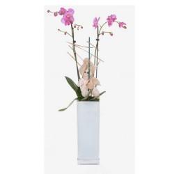 Orquídea en jarrón (F161)
