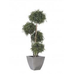 Planta Liofilizada (PLO101)