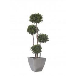 Planta Liofilizada (PLO102)