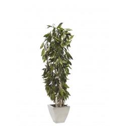 Planta Liofilizada (PLO104)
