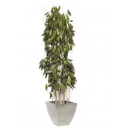 Plantas Liofilizadas Online Env O A Domicilio Madrid