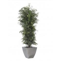 Planta Liofilizada (PLO106)