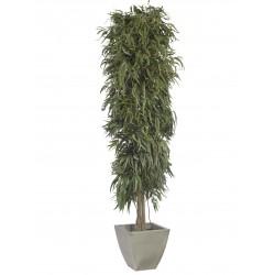Planta Liofilizada (PLO108)