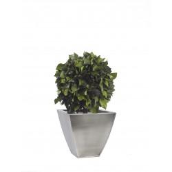 Planta Liofilizada (PLO111)
