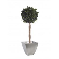 Planta Liofilizada (PLO113)