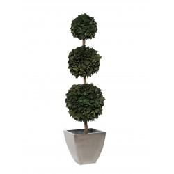 Planta Liofilizada (PLO115)