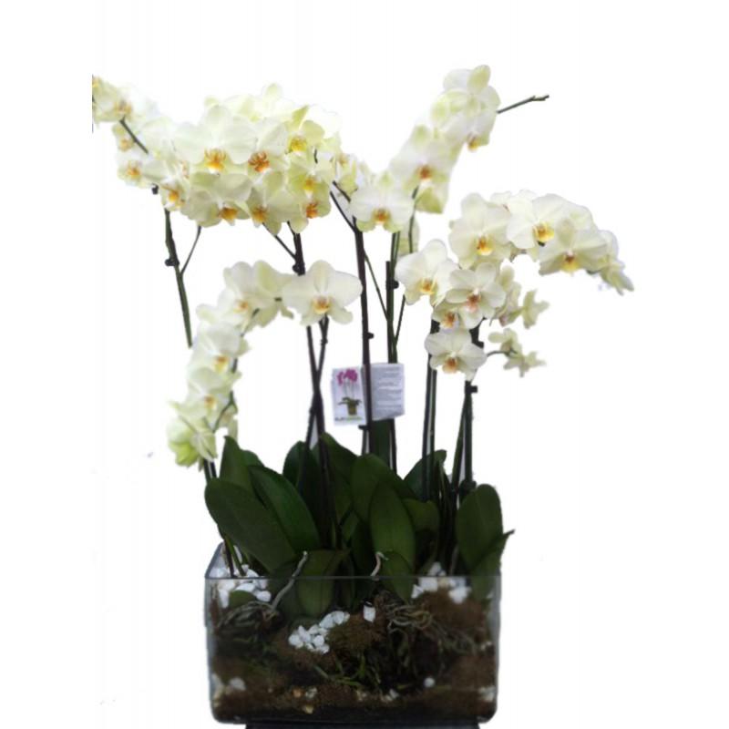 Centro cristal con orquídeas (F113)