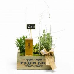 PLANTS AND PERFUM