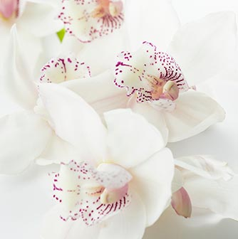 diseño floral fernando espadas