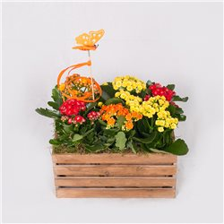 CAJA CON PLANTAS NIGHTLIGHT