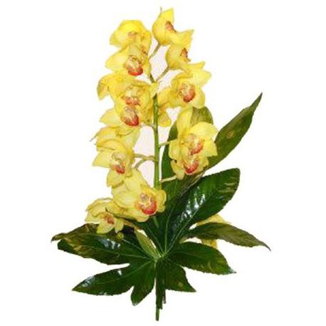Orquídea Cimbidium (F124)