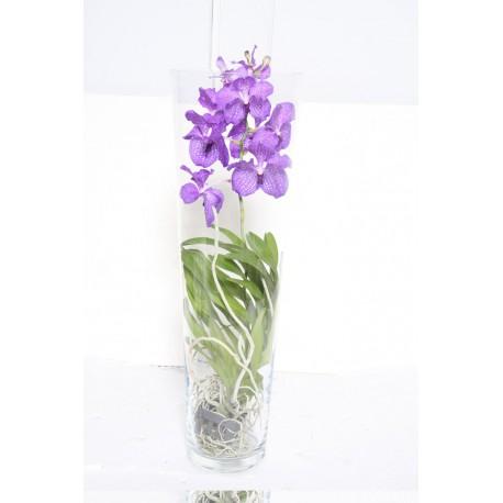 Orquídea Vanda (F162)