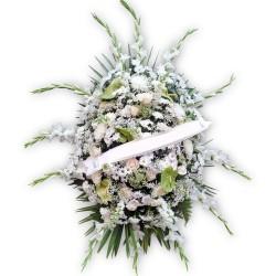 Palma blanca (CO126)