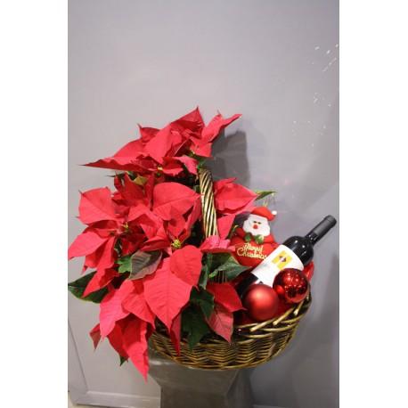 Ponsetias con regalo (CN09)
