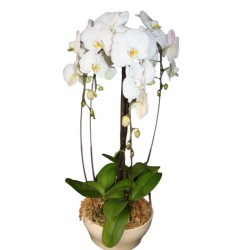 Centro de orquídeas (F130)