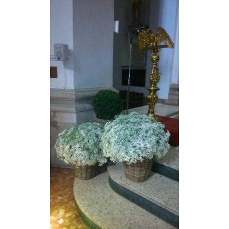 Decoración de iglesias bodas BI-0004