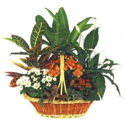 Cesta de plantas Caribe (F151)