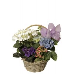 Cesta de plantas con flor (F110)