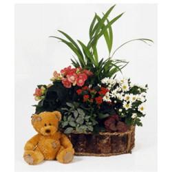 Cesta de plantas con oso (F152)